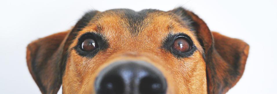 Perfectehond.nl - Alles over de hond!