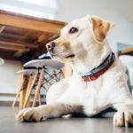 Max populairste hondennaam!