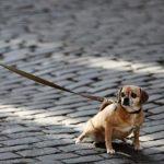 Record honden uitlaten