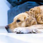 Hondenheld! - Archief foto