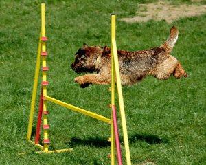 landelijke behendigheidswedstrijd honden