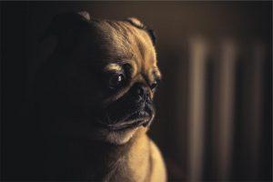 honden begrijpen wat je zegt
