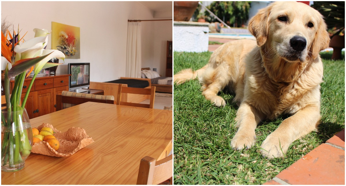 Labradors in Barcelos, Portugal   Vakantiehuis met hond