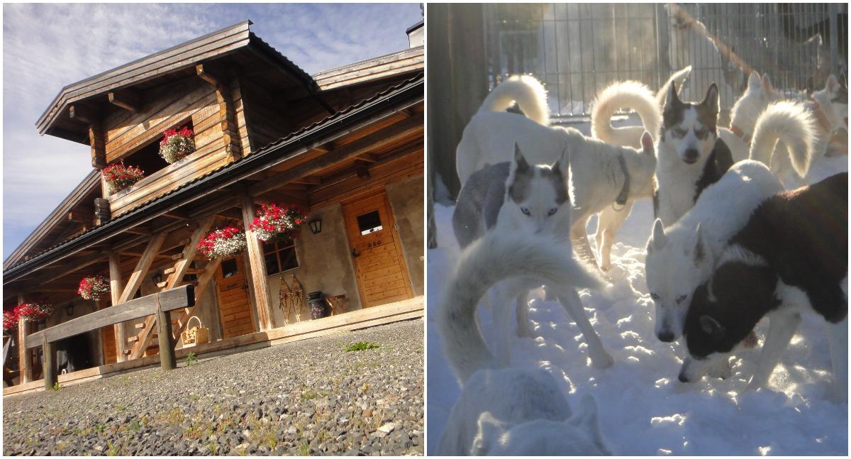 6. Sledehonden in Krokom, Zweden