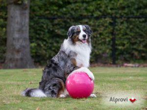 Hond met Treibball