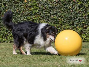 Treibball en hond