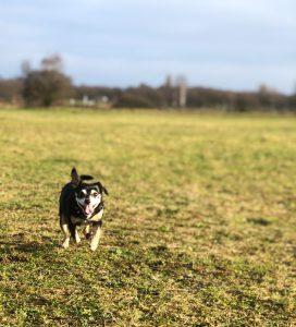 Lola lekker aan het rennen!