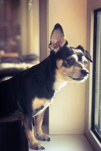 Lola bij het raam
