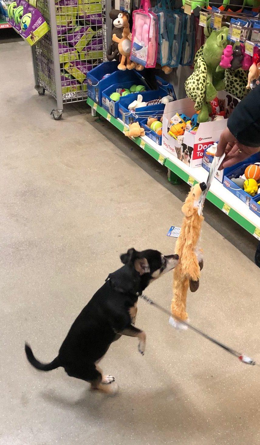 Lola inspecteert een van haar cadeautjes