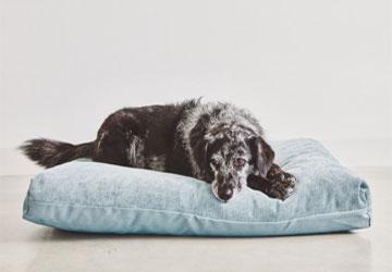 Dogohaves-hond-op-ligkussen