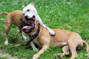 vechten de honden