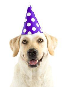 Hond in feeststemming met party hoed
