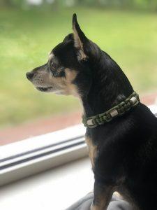 Lola met haar Dexter halsband