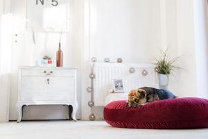 Prachtige kamer met mooi bed voor een hond