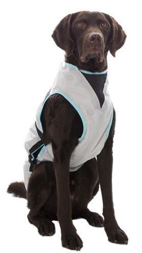 Hond met trui van Kwispel en zo