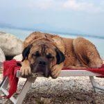 Grote hond op een bankje aan het water