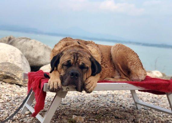 Grote hond op een bankje bij water