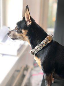 Lola met de Bella Barkley halsband