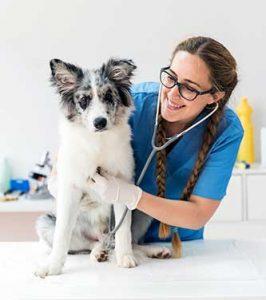 Bij onvoldoende kennis adviseren wij altijd om contact op te nemen met uw eigen dierenarts!