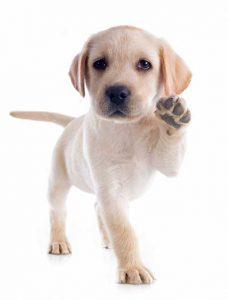 jonge hond