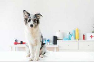 hond bij dierenarts