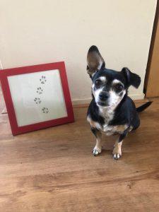 Lola naast een ingelijste foto met haar pootafdrukken