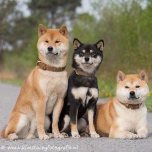 3 hondjes naast elkaar op de foto.