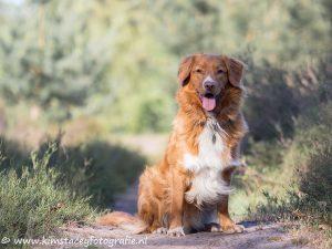 Hond in bos tijdens fotoshoot