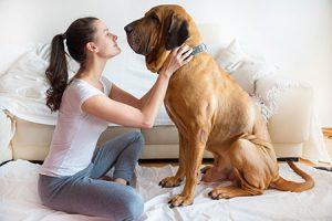 Waarom springen honden omhoog om mensen te begroeten?