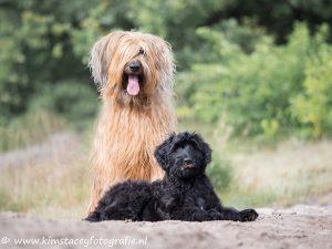 Fotoshoot met twee honden