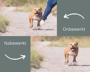 4 tips voor een goede fotografie start!: collage met voor en nabewerking