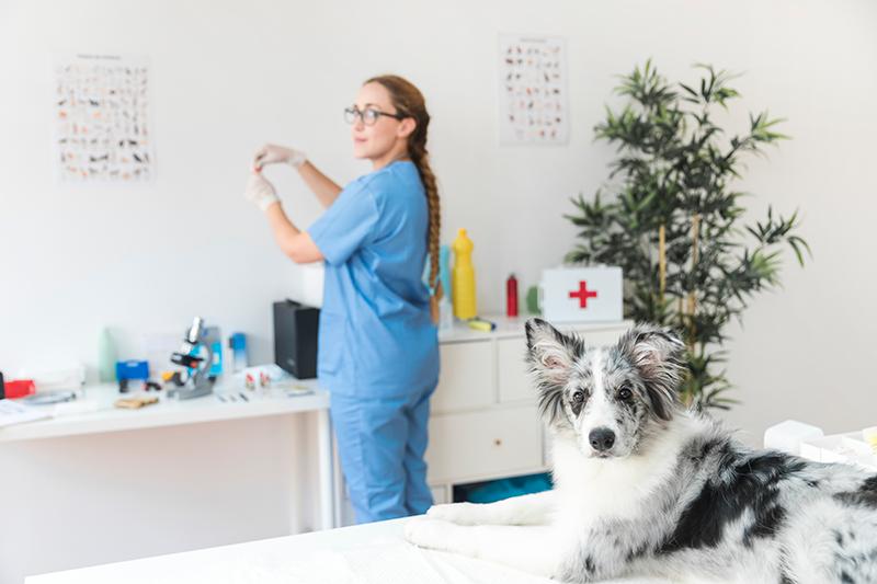 Eerste hulp bij honden | Eerste stappen