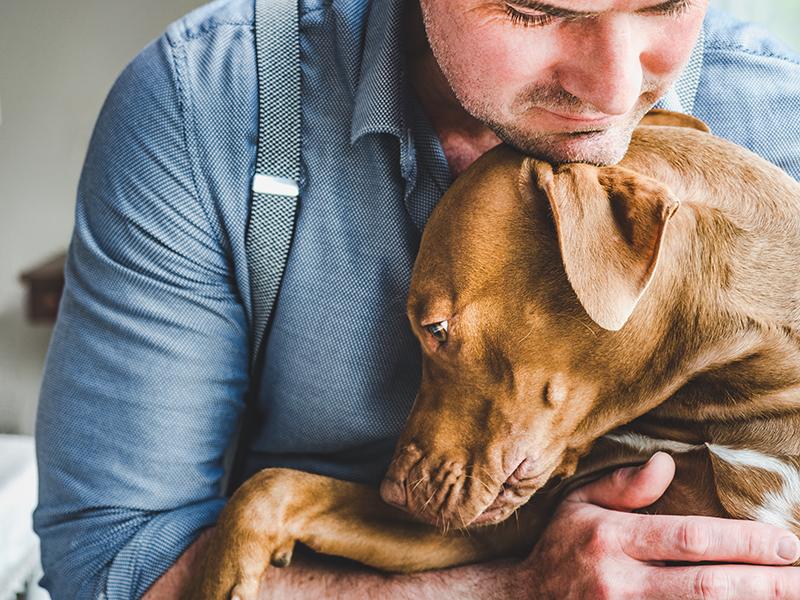 Lintwormen bij honden