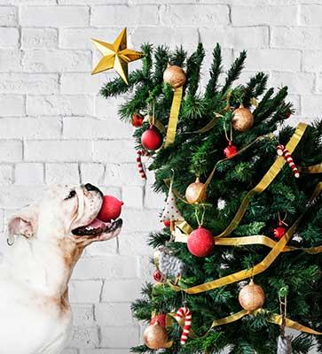 Hond naast kerstboom