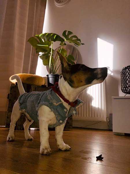 Heeft je hond het koud zonder hondenjas?
