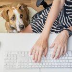 Hond naast computer terwijl baas aan het werk is