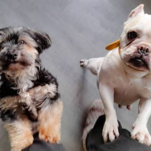2 hondjes op hun achterpoten wachten op een koekje