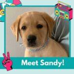 pup Sandy van Hulphond Nederland