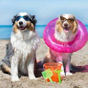 Twee honden op het strand - De mooiste losloopgebieden in provincie Zuid-Holland