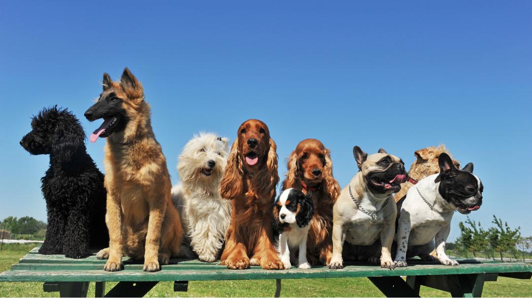 7 Verschillende soorten hondjes zittend naast elkaar
